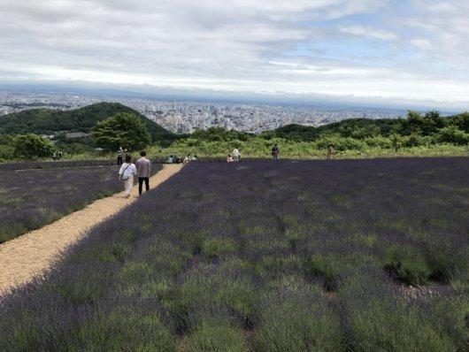 ラベンダーと札幌の街並みを楽しめる